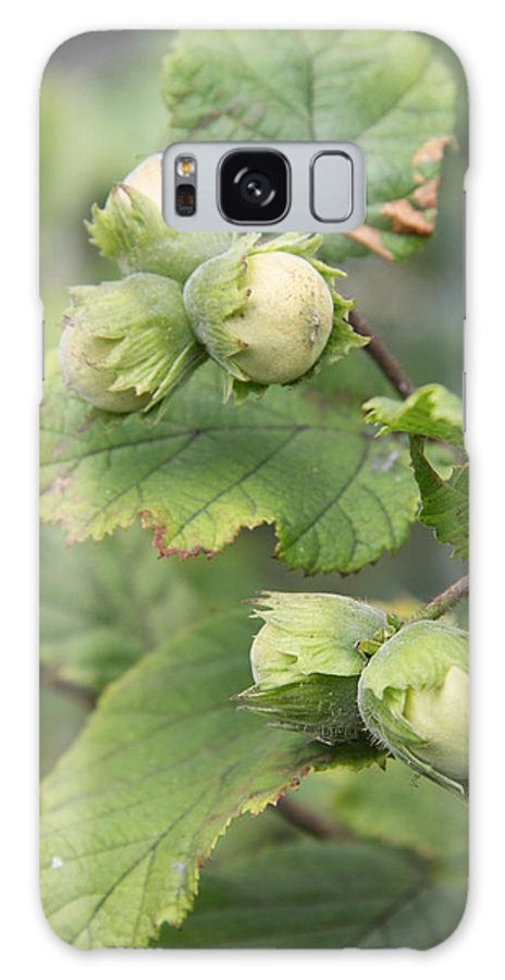Hazelnuts Galaxy S8 Case featuring the photograph Green Hazelnuts by Christiane Schulze Art And Photography