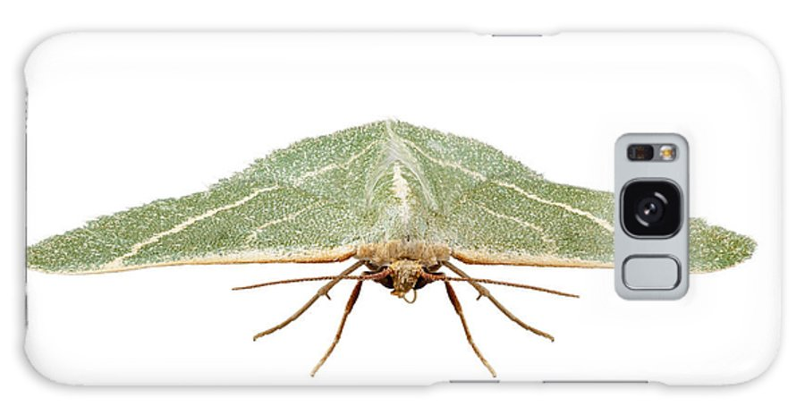 Animal Galaxy S8 Case featuring the photograph Green Moth Chlorissa Etruscaria by Pablo Romero