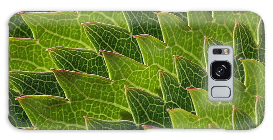 Plant.plants Galaxy S8 Case featuring the photograph Green Scales Of A Dragon by Robert Woodward