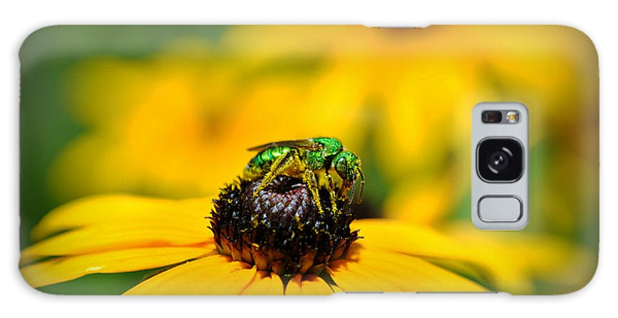 Bee Galaxy S8 Case featuring the photograph Green Sweat Bee by Kelly Nowak