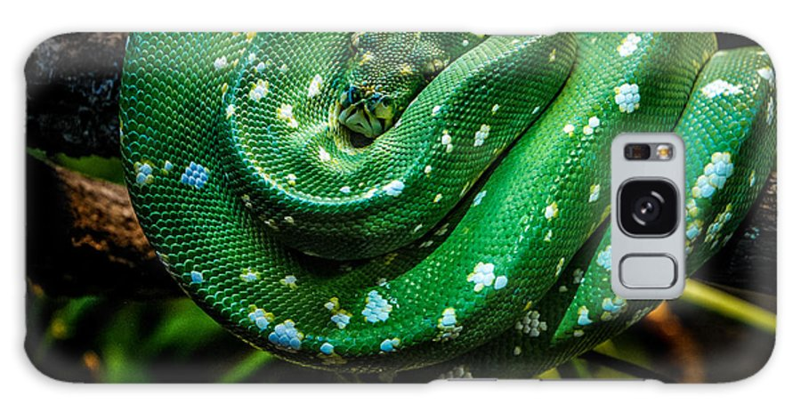 Snake Galaxy S8 Case featuring the photograph Green Tree Python by Grace Grogan