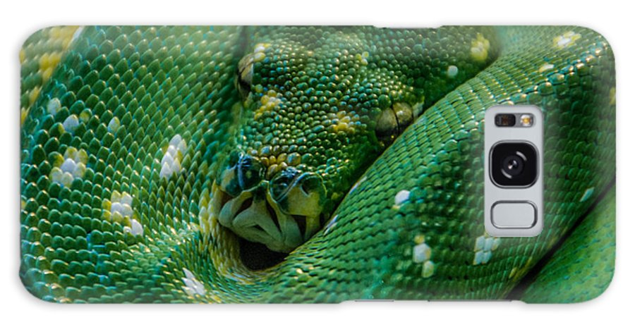 Green Tree Python Galaxy S8 Case featuring the photograph green tree python Macro by Grace Grogan