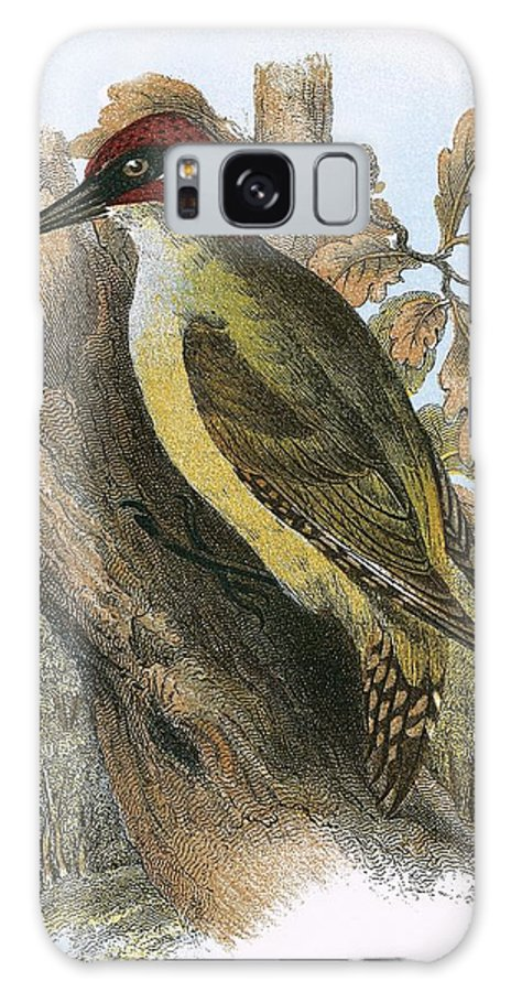 British Birds Galaxy S8 Case featuring the photograph Green Woodpecker by English School