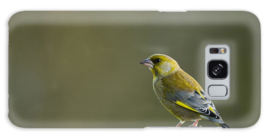 Bark Galaxy S8 Case featuring the photograph Greenfinch by Anne Gilbert