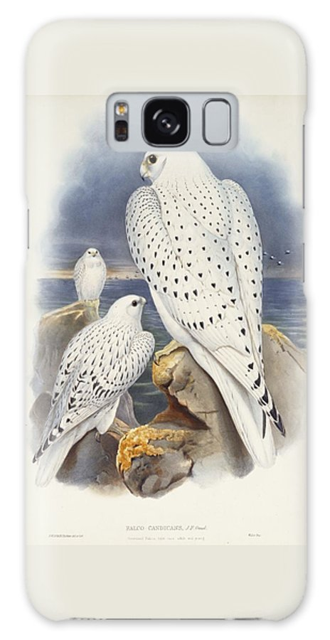 Greenland Falcon Galaxy S8 Case featuring the painting Greenland Falcon by John Gould