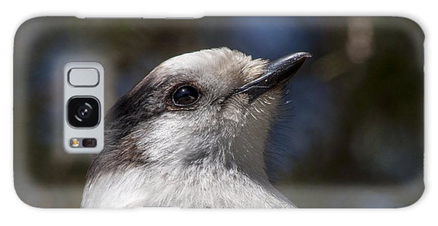 Bird Galaxy S8 Case featuring the photograph Grey Jay by Richard Kitchen