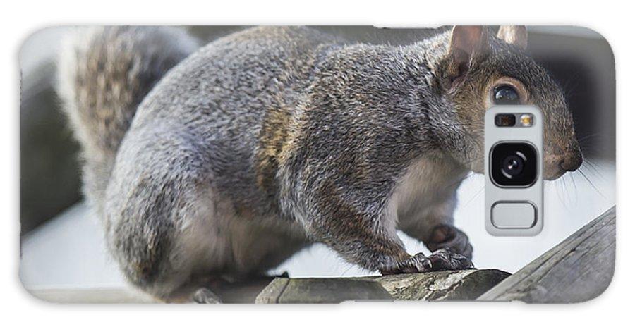 Wildlife Animals Squirrel Grey British Galaxy S8 Case featuring the photograph Grey Squirrel by John Richardson