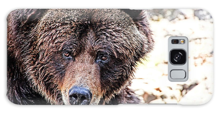 Grizzly Bear Galaxy S8 Case featuring the photograph Grizz by Karol Livote