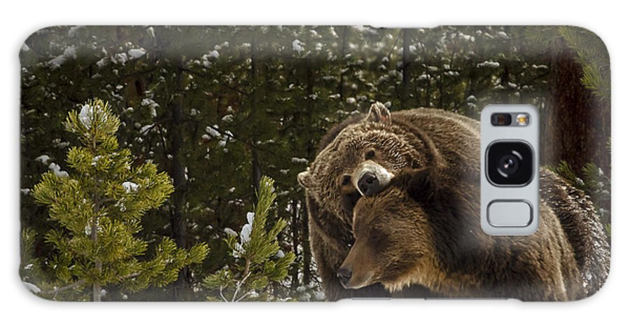 Grizzly Bear Photographs Galaxy S8 Case featuring the photograph Grizzly's Courting by Bruce J Barker