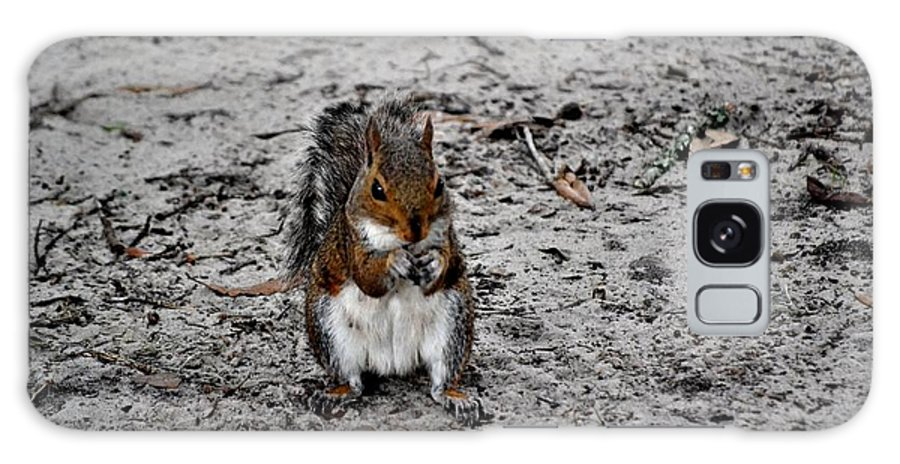Squirrel Galaxy S8 Case featuring the photograph Ground Squirrel by Tara Potts