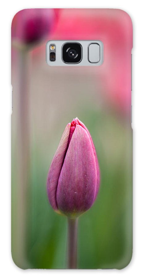 Tulip Galaxy S8 Case featuring the photograph Growing Up by Mike Reid