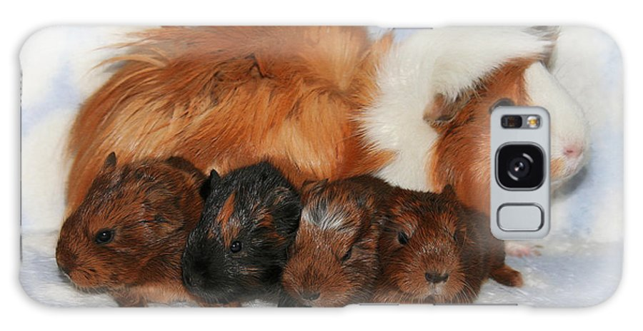 Photo Galaxy S8 Case featuring the photograph Guinea Pig Family by Jutta Maria Pusl