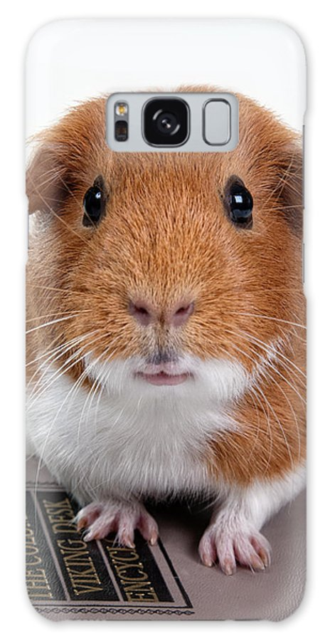 Hamster Face Galaxy S8 Case featuring the photograph Guinea Pig Talent by Susan Stone
