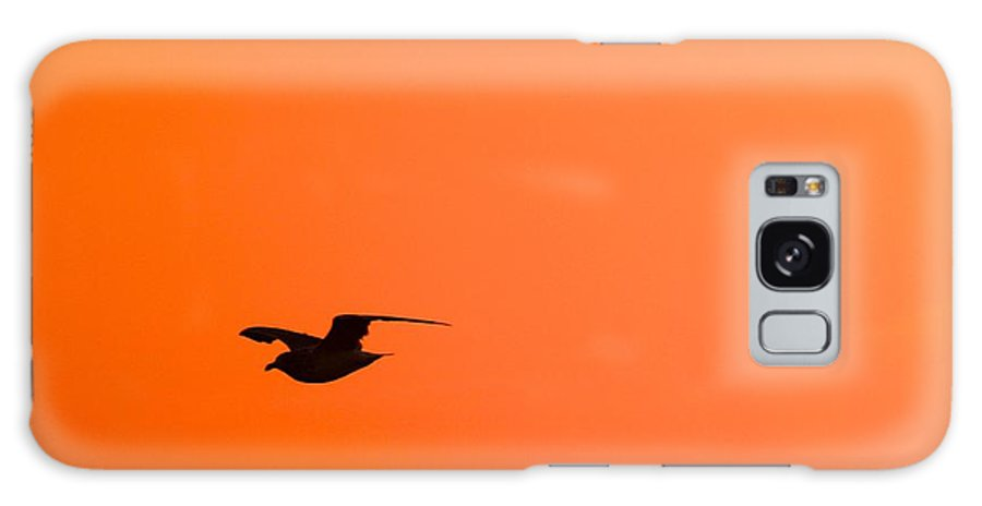 Cape Cod Galaxy S8 Case featuring the photograph Gull At Sunset by Stuart Litoff