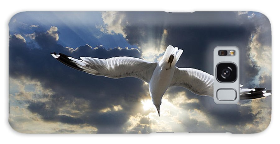 Art Galaxy S8 Case featuring the photograph Gull Flying Under A Radiant Sunburst by Randall Nyhof