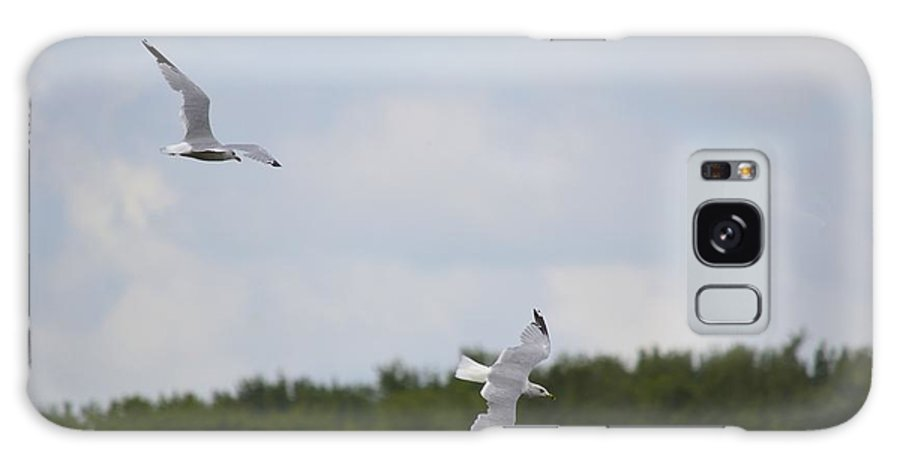 Gulls Galaxy S8 Case featuring the photograph Gulls In Flight by Bonfire Photography