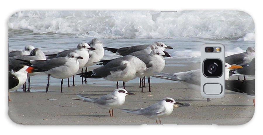 Landscape Galaxy S8 Case featuring the photograph Gulls Terns Skimmers by Ellen Meakin