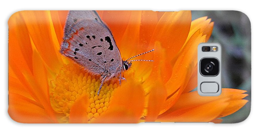Hairstreak Butterfly Galaxy S8 Case featuring the photograph Hairstreak On Calendula by MTBobbins Photography