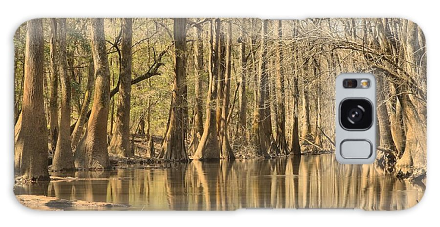 Congaree National Park Galaxy S8 Case featuring the photograph Hall Of Cypress by Adam Jewell