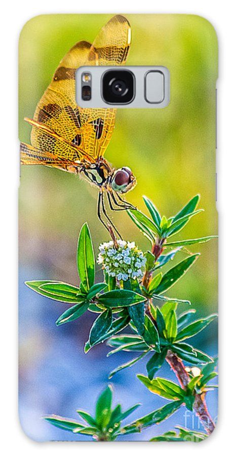 Photography Galaxy S8 Case featuring the digital art Halloween Banner Dragonfly 0762 by Shawn Lyte