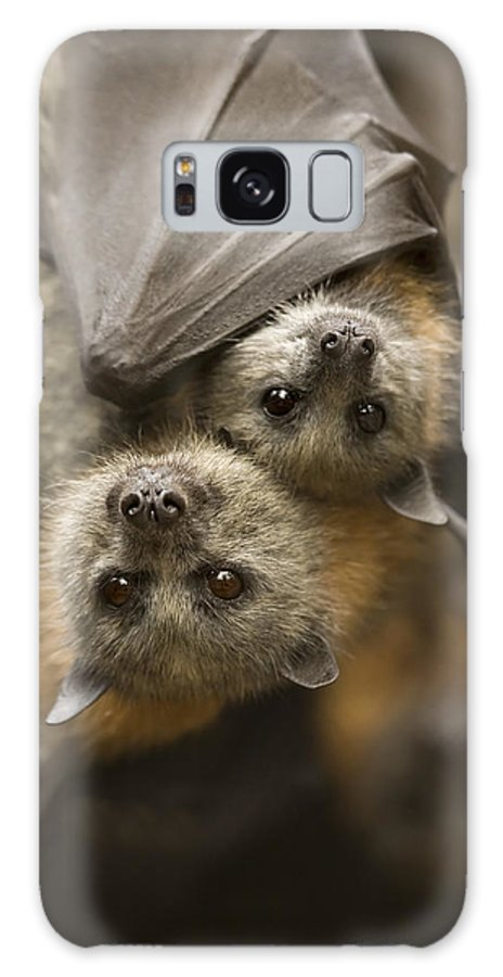 Bats Galaxy S8 Case featuring the photograph Hang In There by Mike Dawson