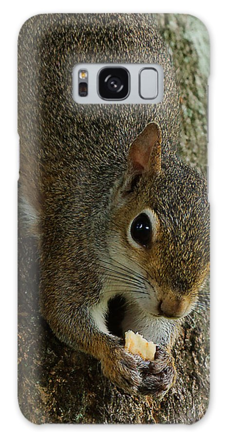 Squirrel Galaxy S8 Case featuring the photograph Hangin Out And Eatin by Dan Dennison