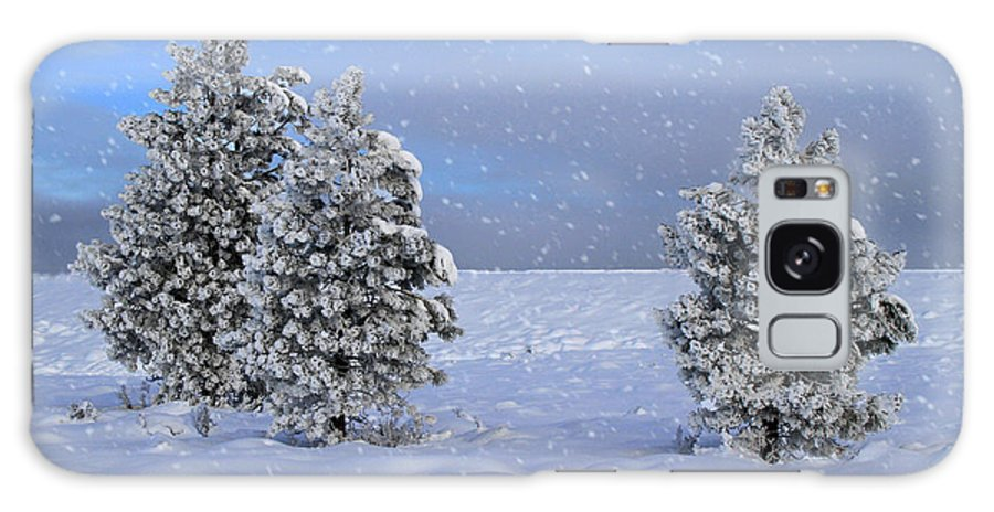 Holidays Galaxy S8 Case featuring the photograph Happy Holidays by Donna Kennedy