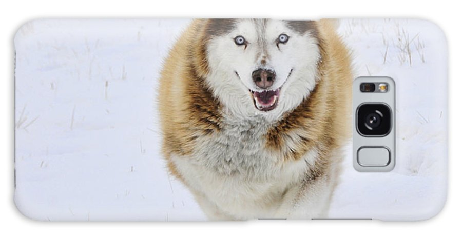 Husky Galaxy S8 Case featuring the photograph Happy Husky by Gary Beeler