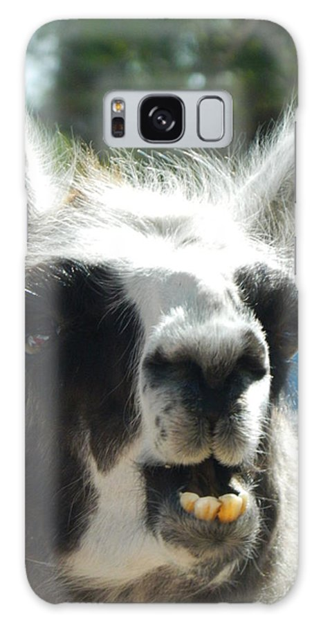 Llama Galaxy S8 Case featuring the photograph Happy Llama by Jessica Coyle