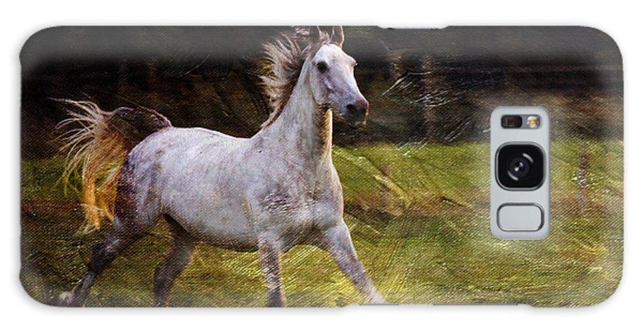 Grey Horse Galaxy S8 Case featuring the photograph Happy Run by Angel Ciesniarska