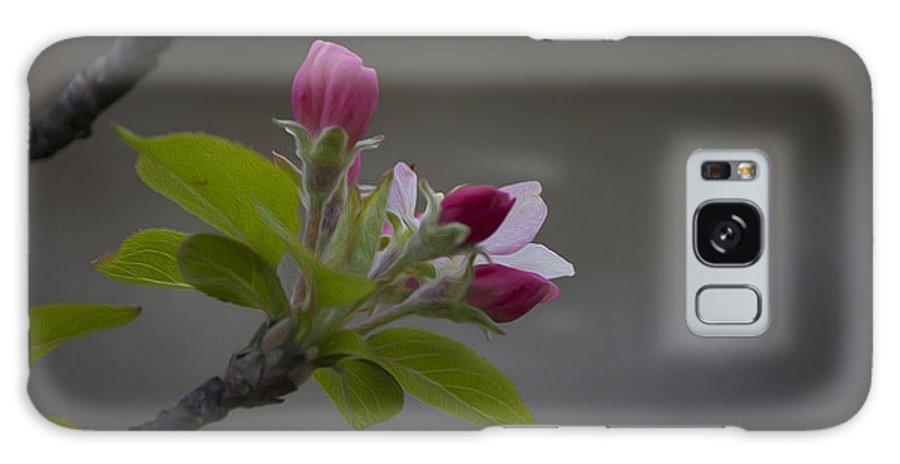 Har Gilo Galaxy S8 Case featuring the photograph Har-gilo Flowers 1 by Juan Carlos Lopez