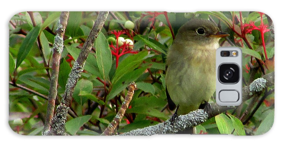 Bird Galaxy S8 Case featuring the photograph Hardly The Least Least Flycatcher by Kimberly Mackowski