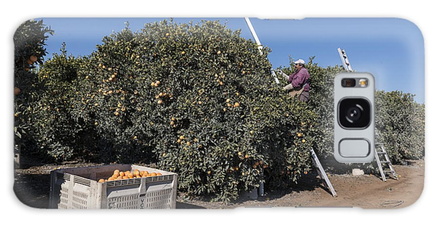 Orange Galaxy S8 Case featuring the photograph Harvesting California Orange Crops by Carol M Highsmith