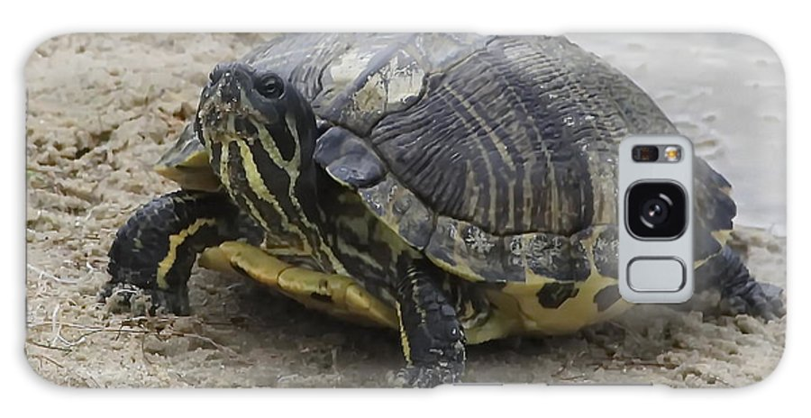 Hatteras Galaxy S8 Case featuring the photograph Hatteras Turtle 2 by Cathy Lindsey
