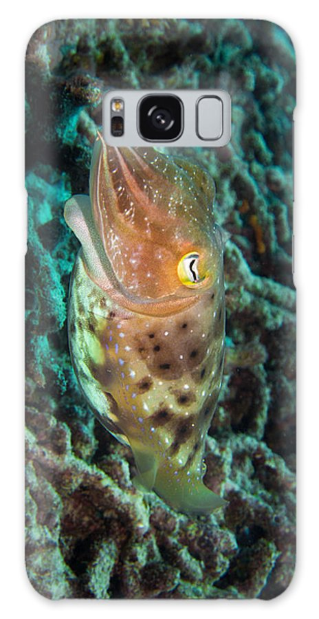 Cuttlefish Galaxy S8 Case featuring the photograph Havis by Chris Lever