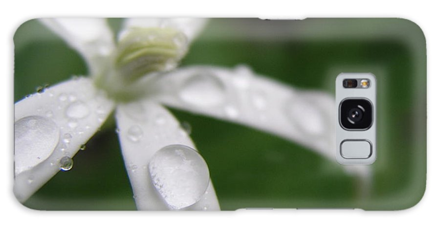 Flowers Galaxy S8 Case featuring the photograph Hawaian Tears by Julie Schroeder