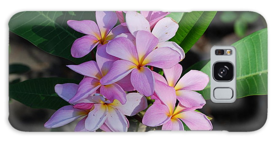 Used By Hawaiian People To Make Necklace Galaxy S8 Case featuring the photograph Hawaiian Lei Flower by Robert Floyd