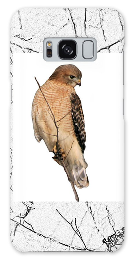 Hawk Galaxy S8 Case featuring the photograph Hawk Framed In Branch Outline by Crystal Heitzman Renskers