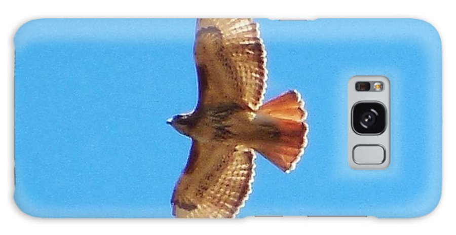 Hawk Galaxy S8 Case featuring the photograph Hawk In Flight by Stacey Pollio