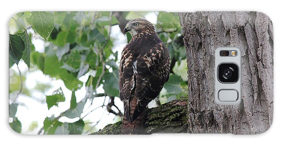 Nature Galaxy S8 Case featuring the photograph Hawk On Alert by Brett Beaver
