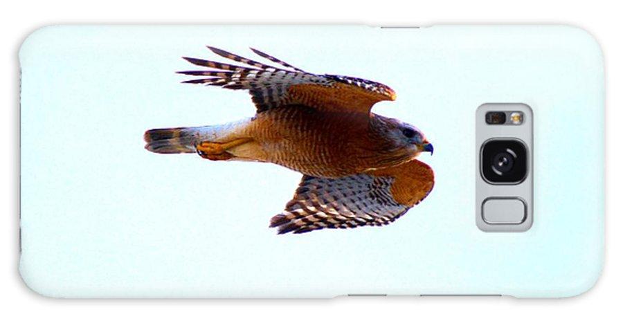 Bird Galaxy S8 Case featuring the photograph Hawk by Tamara Michael