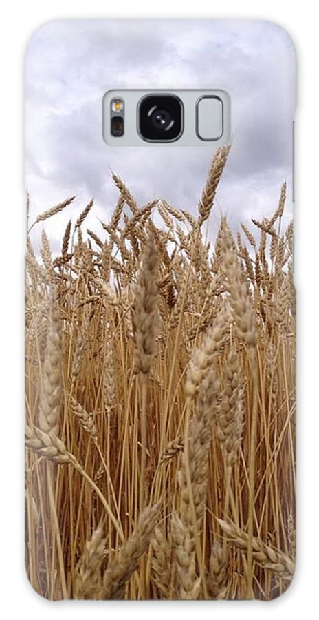 Hay Fields Galaxy S8 Case featuring the photograph Hay Harvest by Penny Homontowski
