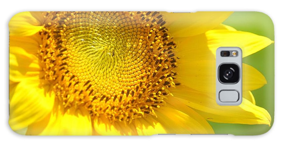 Heart Of The Sunflower Galaxy S8 Case featuring the photograph Heart Of The Sunflower by Maria Urso