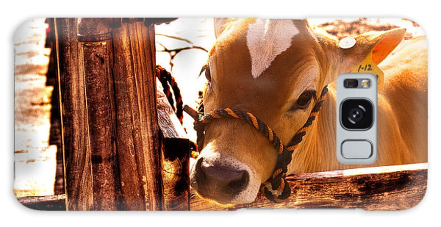 Cow Galaxy S8 Case featuring the photograph Heartlight by Scott Shaw