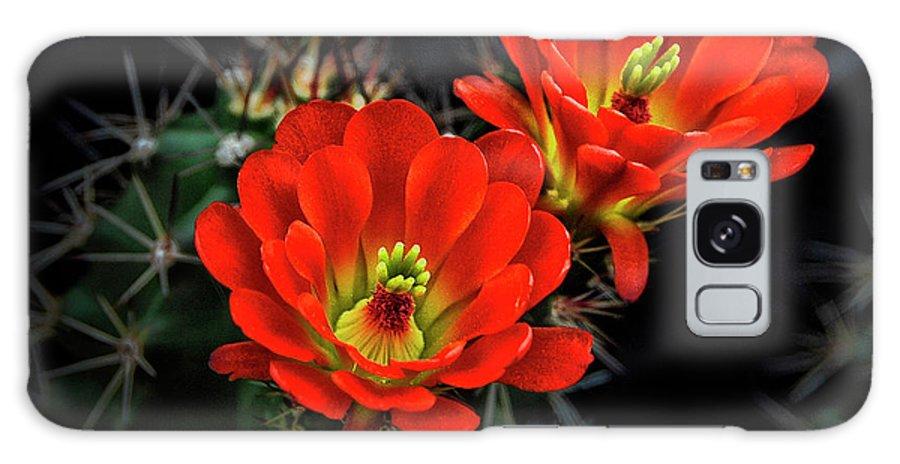 Arizona Galaxy S8 Case featuring the photograph Hedgehog Cactus by Saija Lehtonen