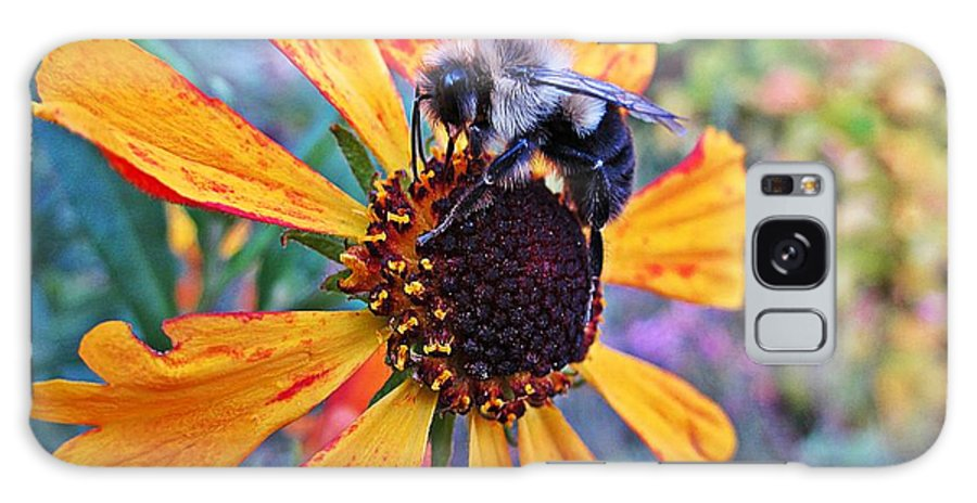 Helenium Mardi Gras Galaxy S8 Case featuring the photograph Helenium Bumble Bee by MTBobbins Photography