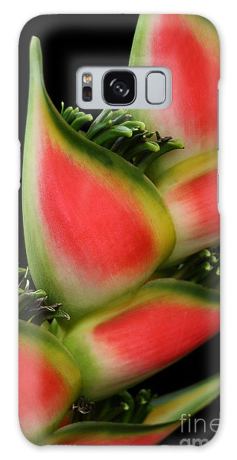 Rainbow Heliconia Galaxy S8 Case featuring the photograph Heliconia Wagneriana - Giant Lobster Claw Heliconiaceae - Maui Hawaii by Sharon Mau