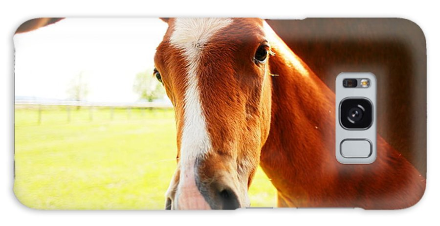Horses Galaxy S8 Case featuring the photograph Hello There by Jeff Swan