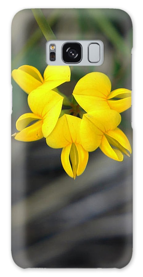 Yellow Galaxy S8 Case featuring the photograph Hello Yellow by Lilliana Mendez