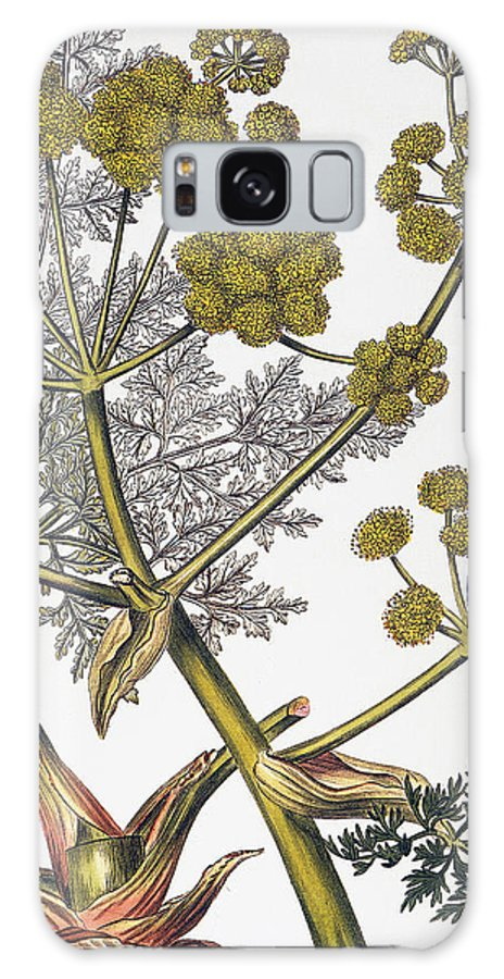1819 Galaxy S8 Case featuring the photograph Herbal: Fennel, 1819 by Granger